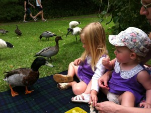 The kids loved feeding the ducks, but the ducks loved it a little bit too much. They started stealing the kid's lunch!