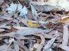 butterfly-springs08