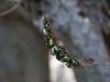 butterfly-springs13