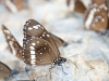 butterfly-springs14